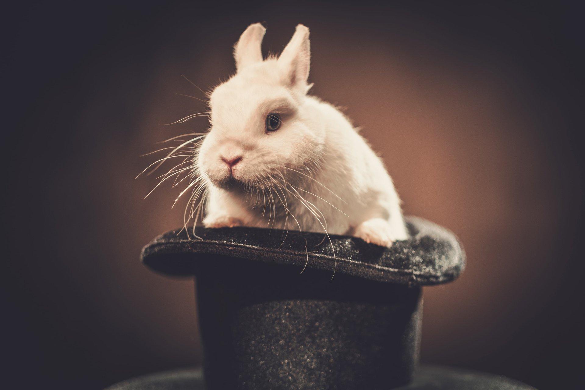 rabbit hat sitemaps article